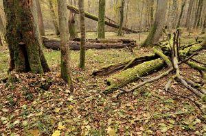 Réserve forestière à haute naturalité