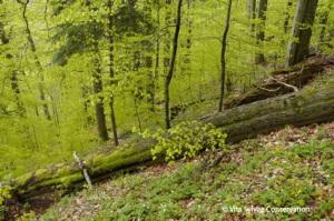 Grands arbres au sol