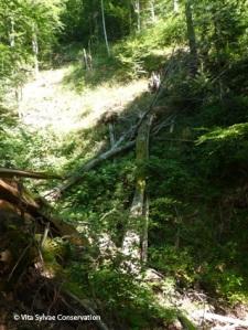 Longs arbres au sol