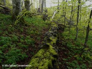 Sous bois forêt vierge printemps